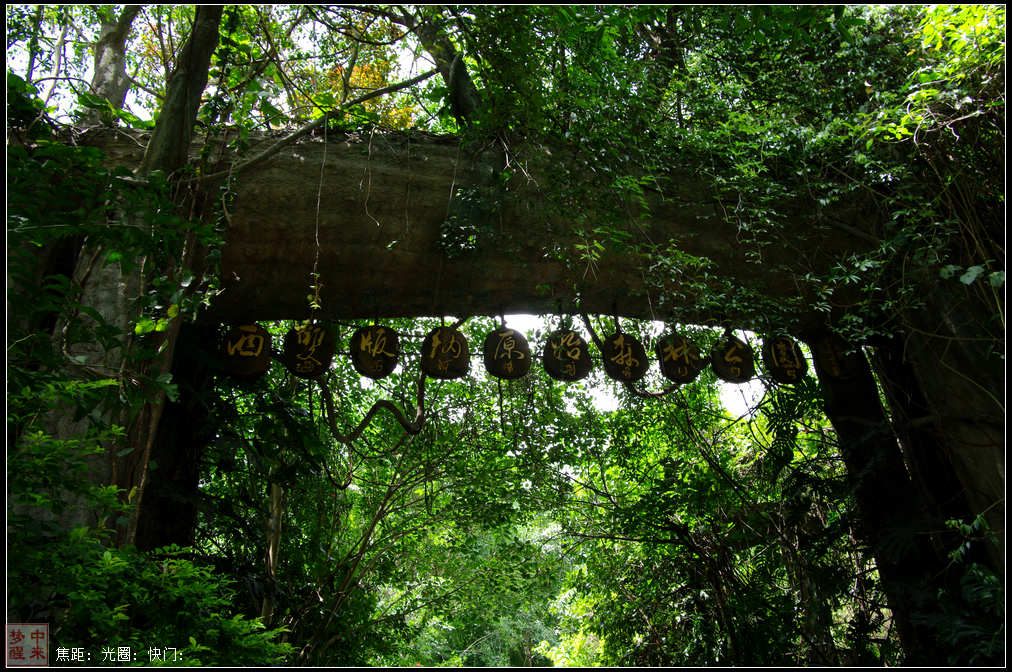 西双版纳森林公园融汇了独特的原始森林自然风光和迷人的民族风情.